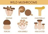 Wild mushrooms vector