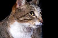 Cat Face Extreme Closeup