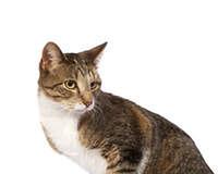 Cat Looking Behind