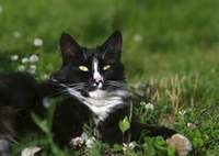 Cat on a grass