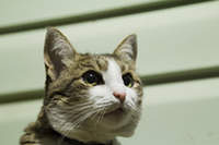 watchful gaze.