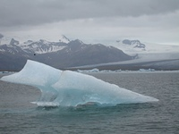 Island Eisscholle