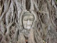 Kopf des Buddha im Wurzelwerk, Ayutthaya