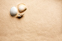Sand Shell Background