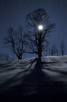 Baum im Schnee und Gegenlicht