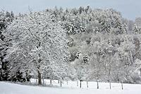 Baume im Winter