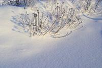 Wald im Winter - forest in winter 21