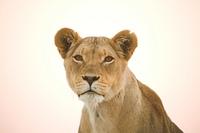 Portrait einer Lowin