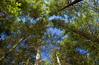Baume im Wald