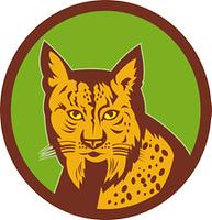 Iberian Lynx head front