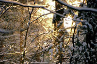 Wald im Winter - forest in winter 63
