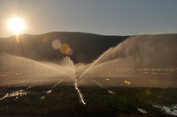 Wassersprenger auf dem Feld