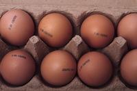 Eierkennzeichnung