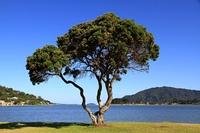 Neuseeland - Tairua