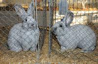 Kaninchen Ausstellung