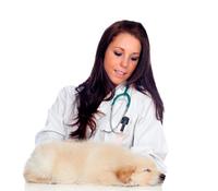 Pretty vet with a cute puppy sleeping