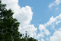 blue sky with cumulus clouds and tree