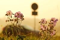 Blume am Strassenrand im Gegenlicht