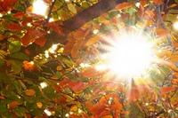 glei?end helle Sonnenstrahlen durch Bl?tterdach