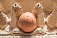 braunes Ei mit Flecken in Verpackung