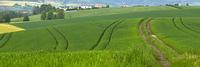 Feldwege bei Dorfen