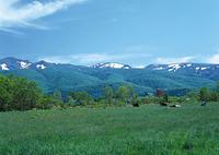 牧草と草原