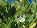 白い小花と葉