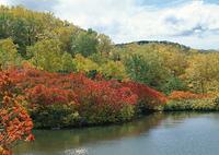 五色温泉の紅葉