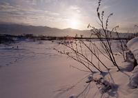 朝焼けの雪原
