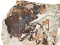 タイトル:化石