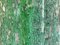 タイトル:樹皮