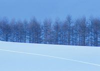 雪原と木立