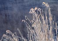 枯れ草と川面