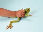 カエルの玩具と手