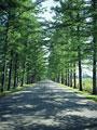 タイトル:並木道