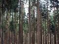 タイトル:森林