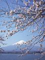サクラと富士山