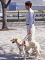 アイメイト(盲導犬)と男性