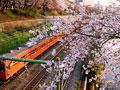 サクラと電車