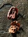 タイトル:枯れ葉