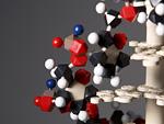 DNA模型