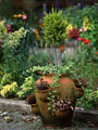タイトル:鉢植え