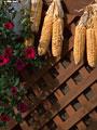 トウモロコシと花