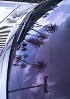 フロントガラスに映るヤシの木
