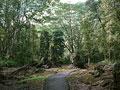 溶岩樹公園