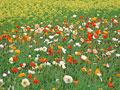 タイトル:花畑