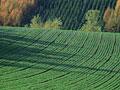 タイトル:畑