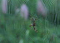 クモとクモの巣