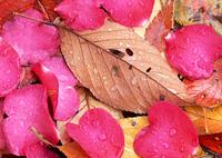 花びらと落ち葉