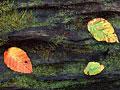 タイトル:落ち葉